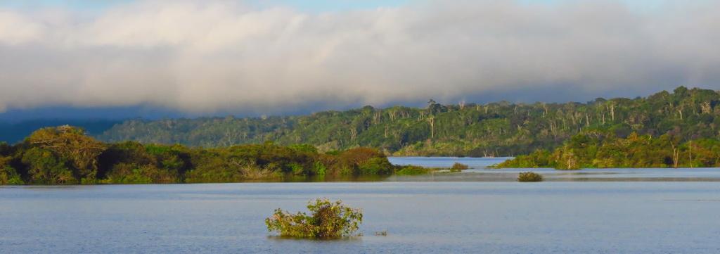 Amazonia Wild!